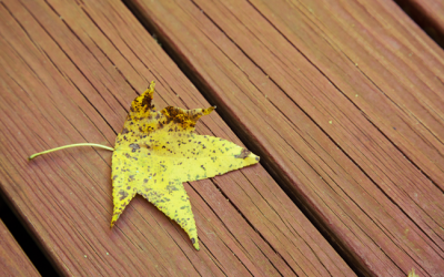 How falling leaves can spell disaster for your deck and cement